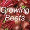 Growing Beets