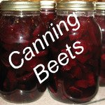 Canning Beets Link