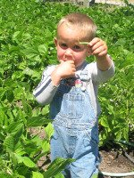 Child Holding Green Bean in Bean Patch