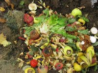 Composting kitchen scraps on garden