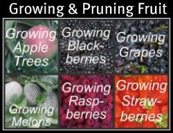 Growing and Pruning Fruit