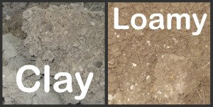 Types of Soil - Clay and Loamy