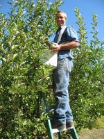 Picking Fresh Apples