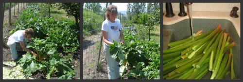 Cutting and Washing Rhubarb