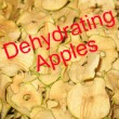 Dehydrating Apples