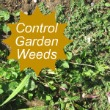 Garden Weeds