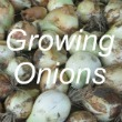 Growing Onions