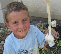 Holding Large Garlic Bulb