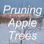 Pruning Apple Trees Link