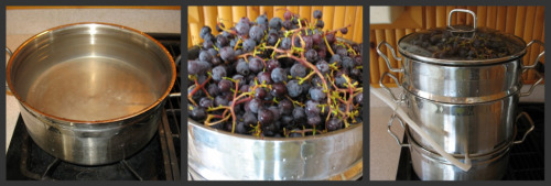 Loading Steamer Juicer with Grapes