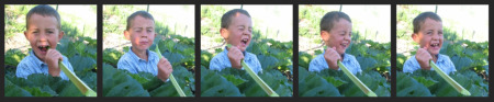Funny Humorous sour face when eating rhubarb