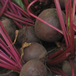 Beets in Root Cellar