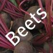 Storing Fresh Beets
