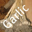 Storing Fresh Garlic