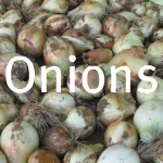 Storing Fresh Onions