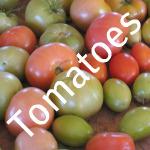 Storing Fresh Tomatoes