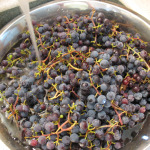 Washing Grapes