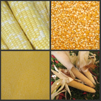 Corn Collage Link