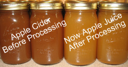 Apple Cider Apple Juice