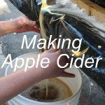 Making Apple Cider Link