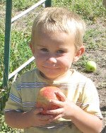 Child eating apple in orchard