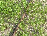 Growing Carrots Seedlings