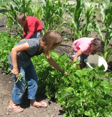 Money Saving Ideas - Grow a Garden - Children Picking Green Beans