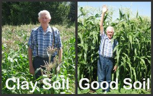 Good soil and poor soil for growing corn