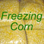 How to Freeze Corn Link