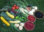 Garden Fruti and Vegetable Mix