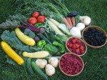 Garden Fruti and Vegetable Mix
