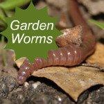 Garden Worms Link