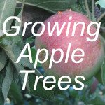 Growing Apple Trees Link