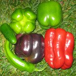 Different Varieties of Peppers