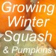 Growing Winter Squash