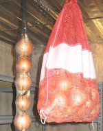 Storing Onions - Hanging
