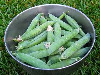 Pea Pods in Bowl
