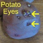 Potato Eyes