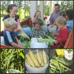 Family Shucking Corn