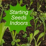 Starting Seeds Indoors Link