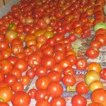 Tomatoes Ripen on Table