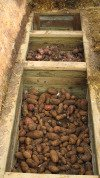 Root Cellars - storing vegetales - carrots, potatoes, beets